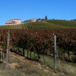World wine production slips amid rough weather; Italy on top