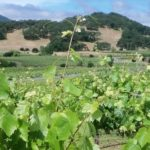 Wine Industry News